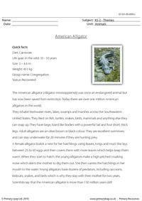 american alligator comprehension