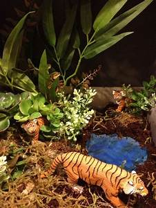 1000+ images about Animal diorama project on Pinterest ...
