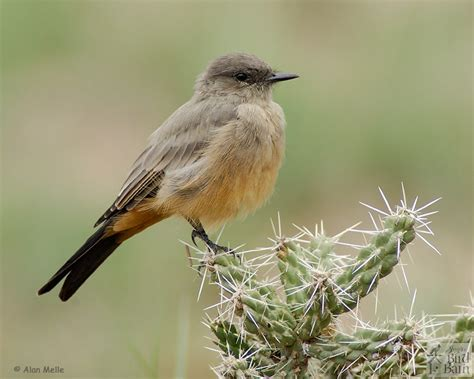 bird identification by color driverlayer search engine