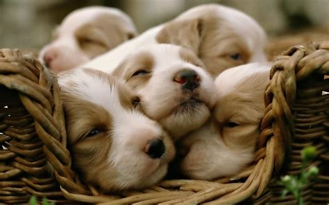 cute puppy wallpapers   perfect    mood
