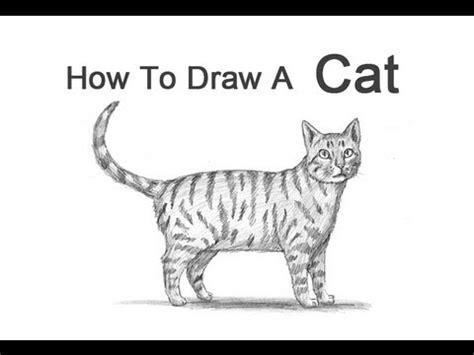 draw  cat tabby youtube