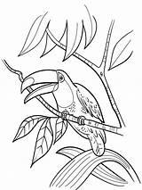Toucan Coloring Bird Birds Tukan Ausmalbilder Getcolorings Malvorlagen Ausdrucken Kostenlos Zum sketch template