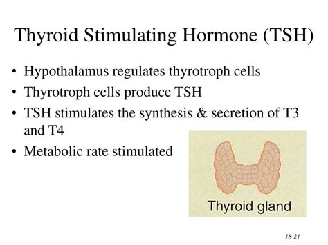 Ppt The Endocrine System General Functions Of Hormones