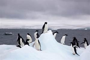 Antarctica Just Hit A Record High Temperature Of 63 5 U00b0f