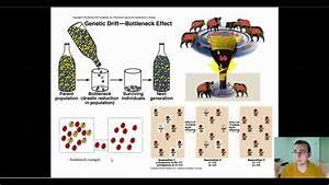 Microevolution Through Genetic Drift