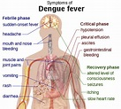 How to Tell If You've Got Dengue Fever in Thailand and ...