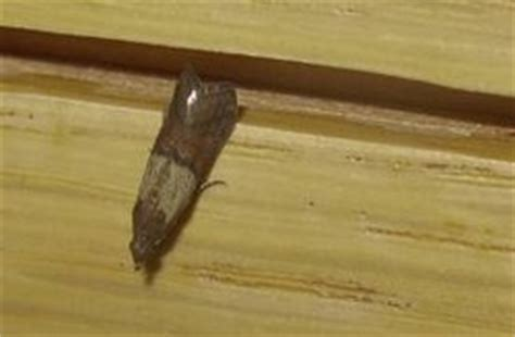 Maggots on the ceiling? Moths in the kitchen? You could