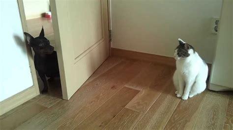 고양이와 강아지의 관계 Dog And Cat