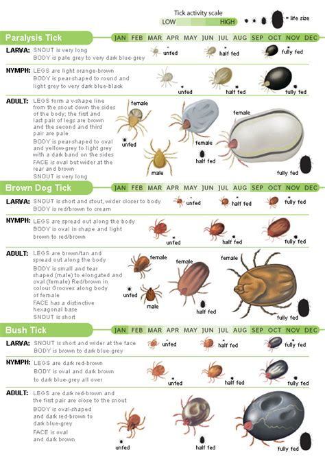 tick identification chart signs quakers hill veterinary hospital