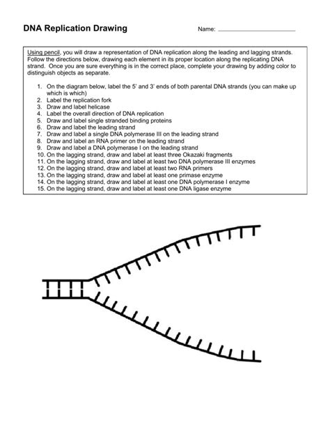dna replication fork drawing