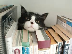 cat book cat caf 233 s library cats and museum cats oh my