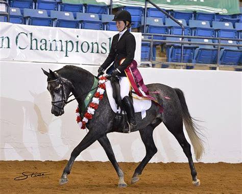 horse dressage arabian training champion under jr visit ten reserve horses level national