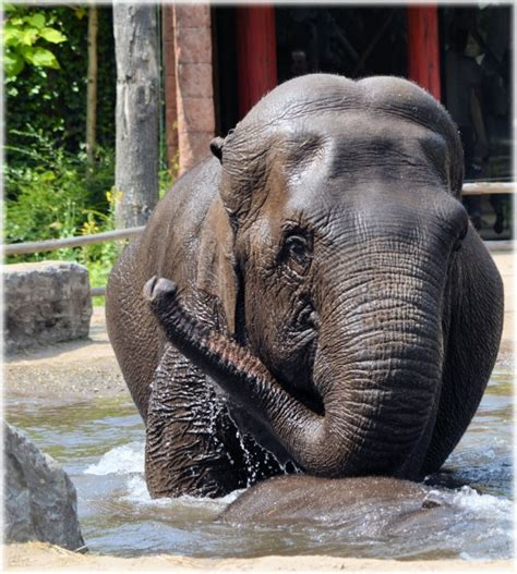 elephant tub india in the bath tub with the elephants 01 free stock photo