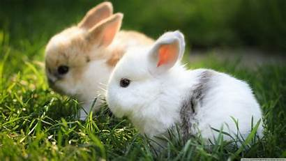 Bunnies Rabbit Desktop Laptop