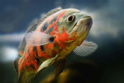 types  fish  popular saltwater  freshwater fish
