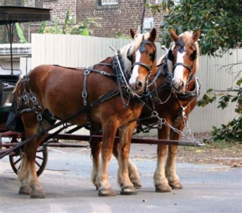 carrozza cavalli carrozze a cavallo a rischio bergamini e stella fi