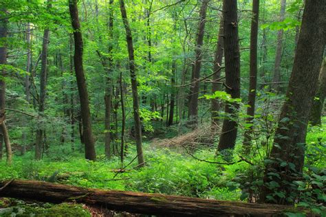 picture wood lichen landscape green nature leaf