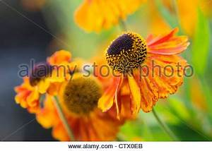 Cluster of bright orange flowers with petals edged with