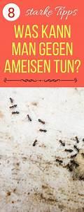 Ameisen Im Rasen Wirksam Bekämpfen : die besten 20 ameisen ideen auf pinterest wissenschaft ~ Whattoseeinmadrid.com Haus und Dekorationen