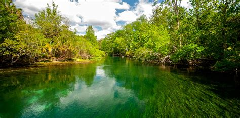 About Silver Springs State Park-florida's First Attraction