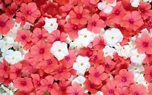 Flower wallpaper | 1920x1080 | #22944