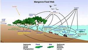 Image Result For Estuary Food Web