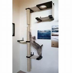 Katzen Fernhalten Von Möbeln : perfekte all in one katze die komplexe halten sie ihre ~ Michelbontemps.com Haus und Dekorationen