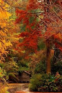 Cabin, In, The, Autumn, Woods