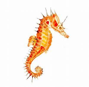 Orange Seahorse portrait, Original Watercolor Seahorse ...