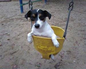 17 Best images about gorditos♥ on Pinterest | Cats, Puppys ...