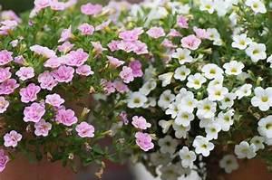 Herbstblumen Für Kübel : balkon herbst bepflanzen raum und m beldesign inspiration ~ Buech-reservation.com Haus und Dekorationen