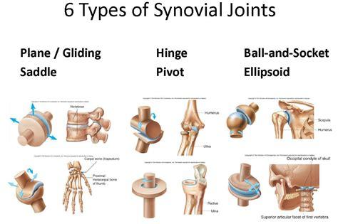 Bone, Joint, Cartilage, Ligament At Washington University