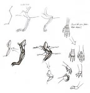How to Draw Dragon Front Legs