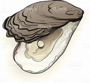 Real Oyster And Pearl Stock Vector Art & More Images of ...