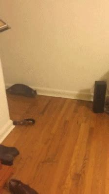 excited cat gifs find share  giphy