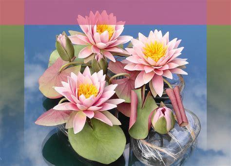 pasta di mais fiori creazioni di avesani porcellana fredda pasta
