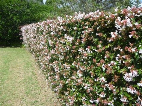 floral hedges hedges grow out and branches on pinterest