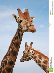 Afrikaans dier