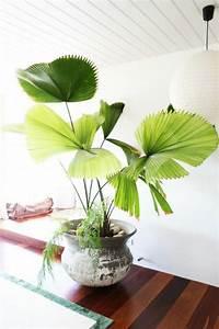 Pflegeleichte Zimmerpflanzen Mit Blüten : die besten 25 pflegeleichte zimmerpflanzen ideen auf pinterest raumklima topfpflanzen und ~ Sanjose-hotels-ca.com Haus und Dekorationen