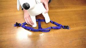 Petchampion - Step In Harness  How To