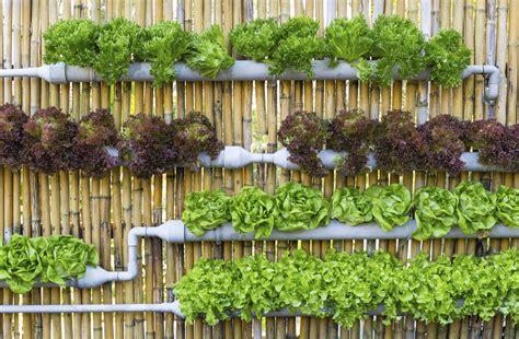 urban micro gardening info micro gardening tips  city