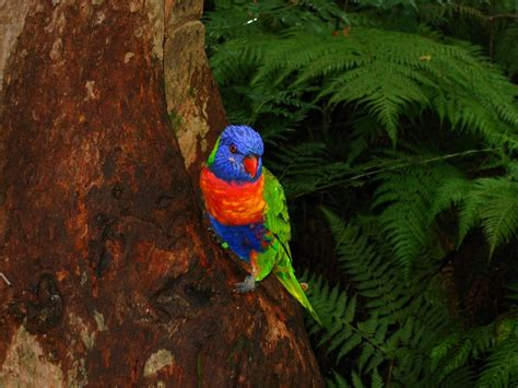 A Tropical Wildlife Paradise: 9 Most Beautiful Rainforests
