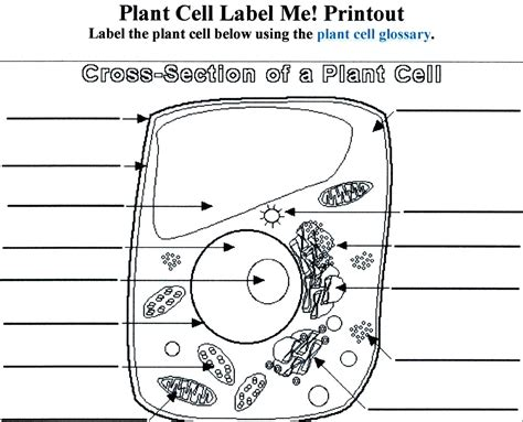 diagram blank plant cell diagram 7th grade