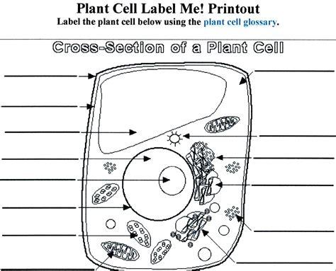 Diagram Blank Plant Cell Diagram 7th Grade