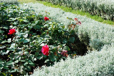 Französischer Garten Pflanzen by Franz 246 Sischer Garten Berlingarten