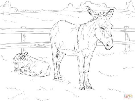 Donkey with Baby Super Coloring Baby coloring pages