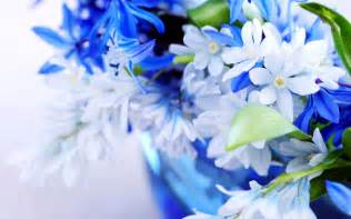 flowers delivered blue flower wallpapers hd wallpapers