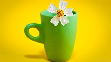 flower cup wallpapers hd wallpapers id