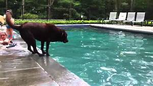The hesitant dog. - YouTube