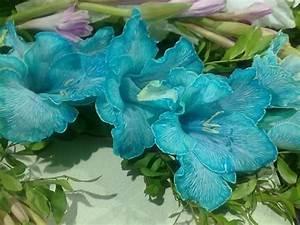 Blue Gladiolus- in season in july gardening Pinterest